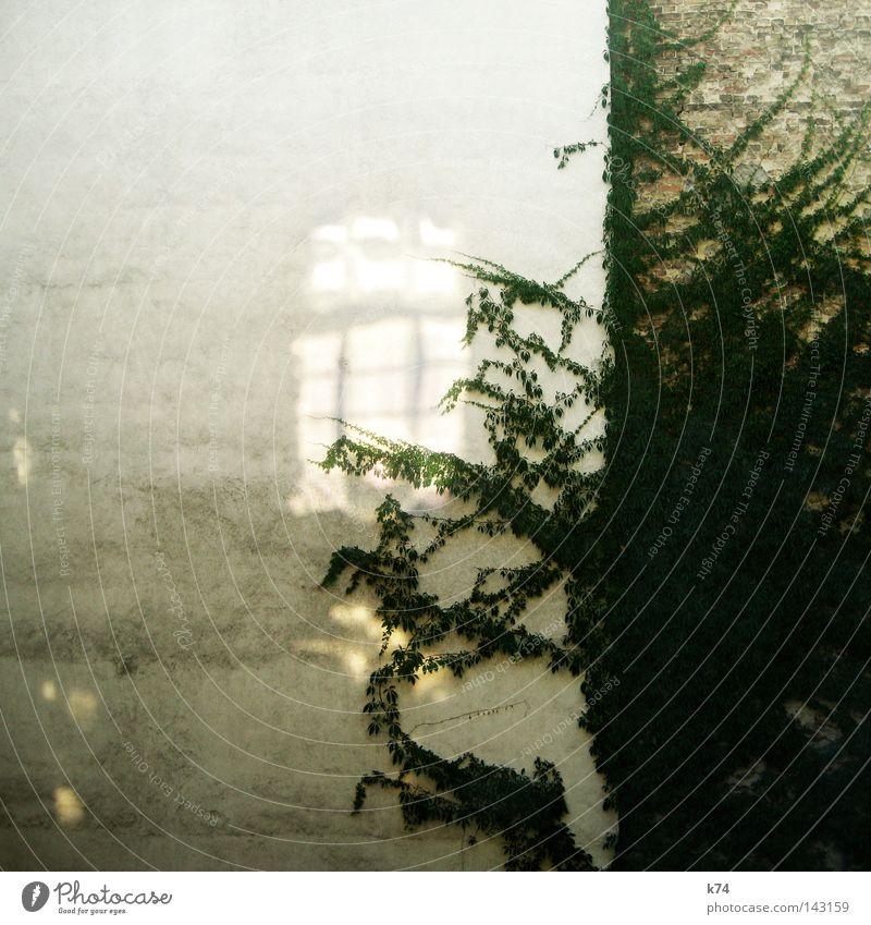 Zeitfenster Wand Fenster Zukunft Vergänglichkeit Vergangenheit Lücke Hof Momentaufnahme Illusion Gegenwart Entwicklung Ranke Altbau Efeu Wunschvorstellung