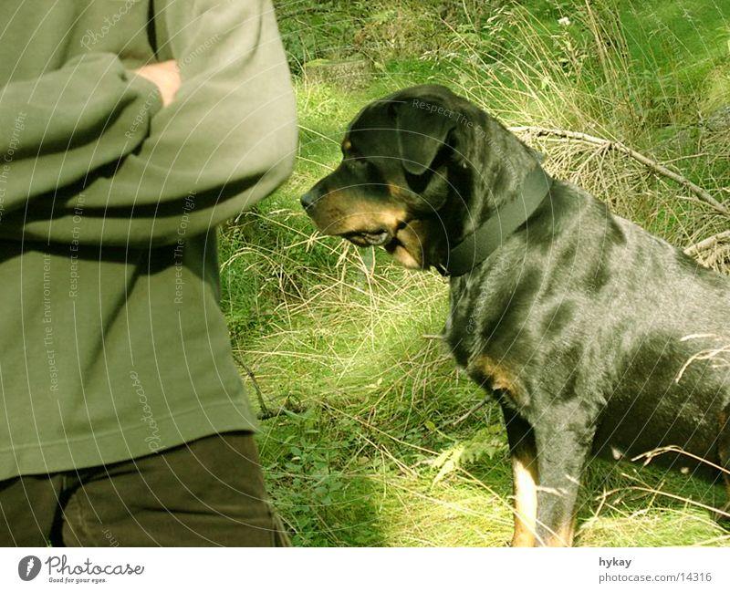 cara-mel Hund ruhig Wiese warten Publikum Treue Rottweiler