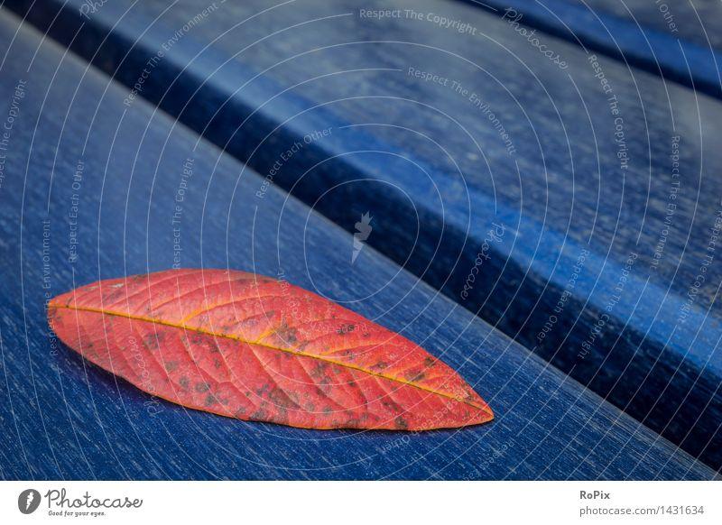 Herbstlaub Erneuerbare Energie Windkraftanlage Umwelt Natur Pflanze Wetter Baum Blatt herbstlich Herbstbeginn Park Platz Holz einfach schön einzigartig kalt