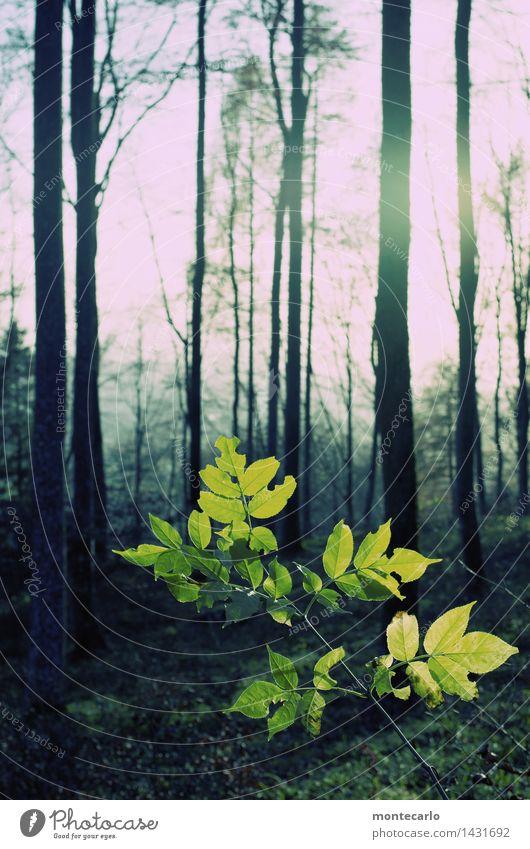 wald Umwelt Natur Pflanze Urelemente Erde Luft Himmel Sonnenlicht Herbst Wetter Schönes Wetter Baum Sträucher Grünpflanze Wildpflanze dunkel dünn authentisch