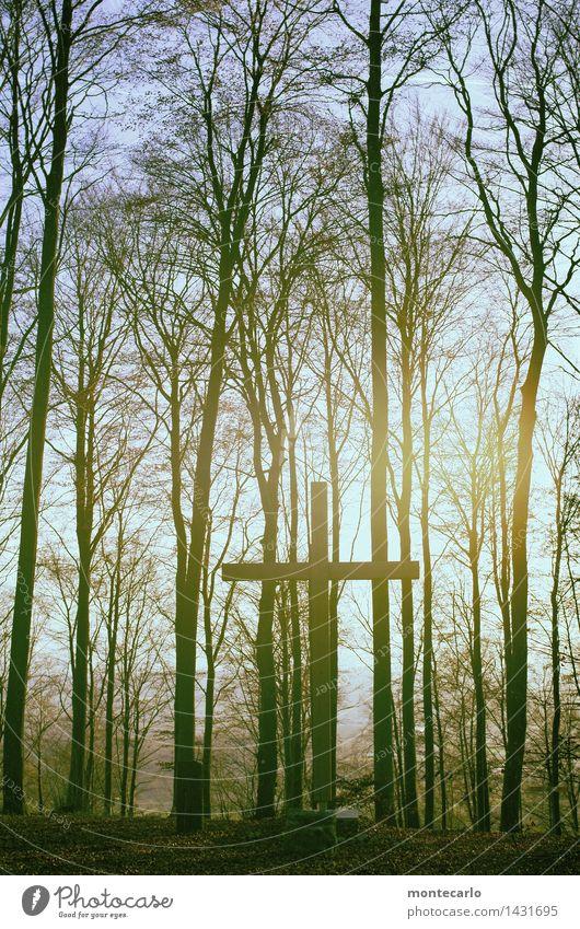 friedwald Umwelt Natur Pflanze Urelemente Erde Luft Himmel Sonnenlicht Herbst Schönes Wetter Baum Blatt Grünpflanze Wildpflanze Wald Holzkreuz ästhetisch