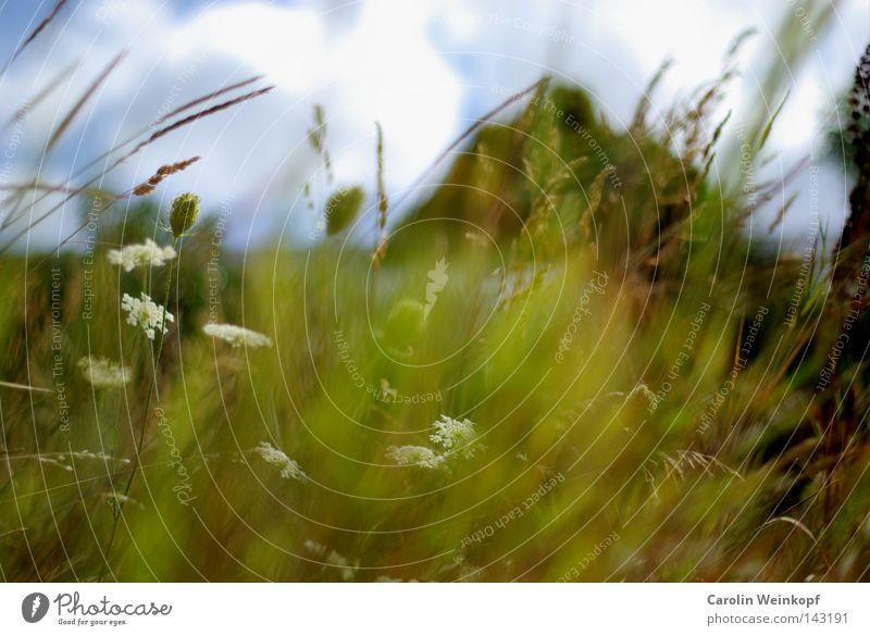 Landluft. Himmel schön Pflanze Sonne Blume Sommer Wolken Haus Wiese Freiheit Gefühle Gras Blüte Feld Wind Sträucher