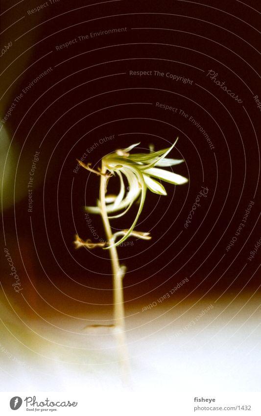 Schattenpflanze Pflanze dunkel Trieb