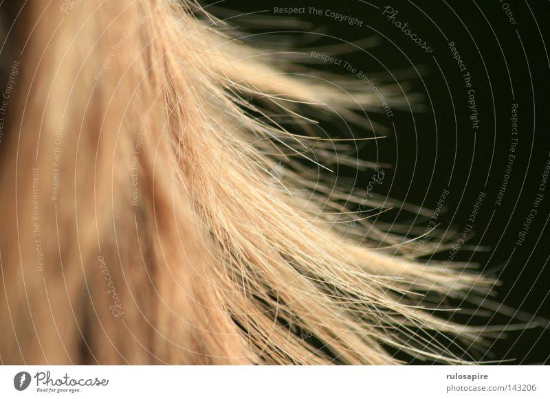 lauter haaare Mensch feminin Detailaufnahme Bildausschnitt Haare & Frisuren blond rothaarig Glätte zerzaust mehrere durcheinander Unschärfe dunkel Haarschopf