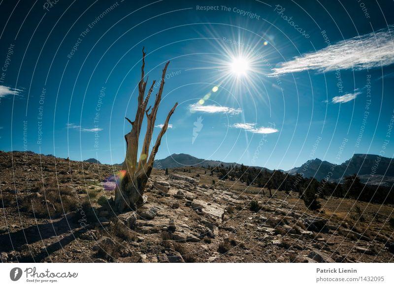 High Altitude Himmel Natur Ferien & Urlaub & Reisen Pflanze Sommer Baum Sonne Landschaft Wolken Ferne Berge u. Gebirge Umwelt Leben Freiheit Felsen Tourismus