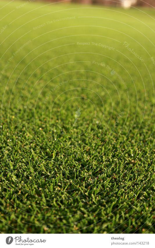 Golfplatz rasen Sportrasen Fressen Gras Sportplatz grün Schärfeverlauf