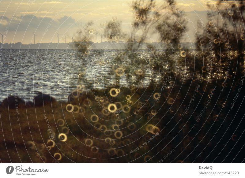Perlstrauch Wasser Pflanze Sommer Meer Strand Wolken Küste Sand See Horizont Wellen Kreis Sträucher Seeufer Ostsee Schmuck