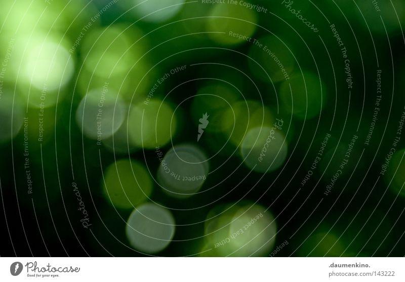 die bewegung zwischen den regentropfen Gras Baum Blatt Bildpunkt Fehler Unschärfe abstrakt Sommer obskur Erde Sand Brennpunkt Punkt Kugel Kreis Fleck Farbe