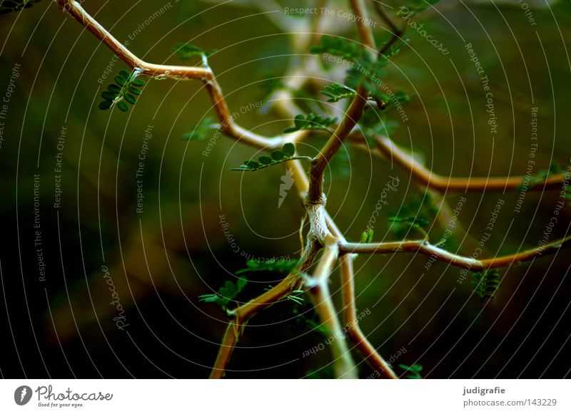 Wald Baum Sträucher Neuseeland Geäst Zweige u. Äste Natur Umwelt Blatt Wachstum grün Wege & Pfade verzweigt durcheinander Farbe zickzackstrauch