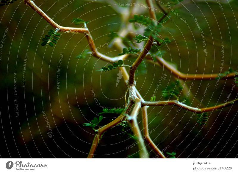 Wald Natur grün Baum Farbe Blatt Umwelt Wege & Pfade Wachstum Sträucher durcheinander Geäst Neuseeland Zweige u. Äste verzweigt