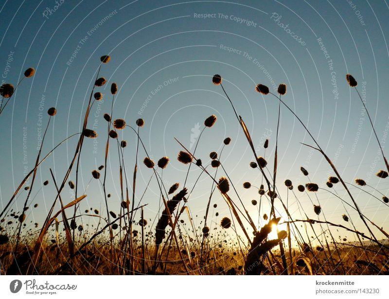 Kornfeldbett Getreide Ähren Halm Weizen Gras Mehl Himmel Ernährung Lebensmittel Landwirtschaft Ackerbau Feldarbeit Versorgung Appetit & Hunger Verlauf Italien
