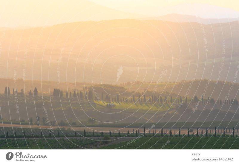 Am Ende des Tages Umwelt Landschaft Himmel Sonnenaufgang Sonnenuntergang Sommer Schönes Wetter Pflanze Baum Zypresse Wiese Feld Hügel Italien Toskana
