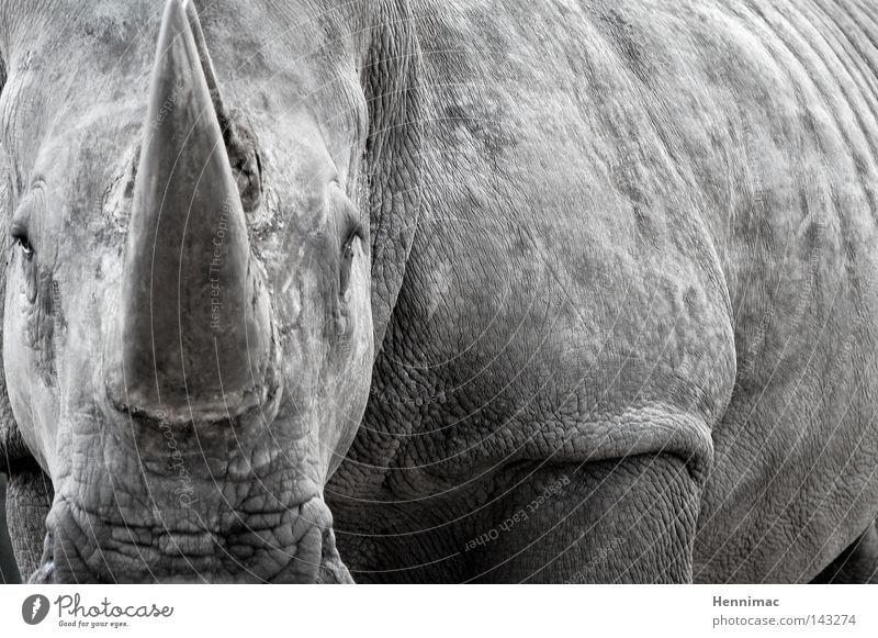 Mein letztes Foto. Natur alt Tier grau Angst Haut groß Macht gefährlich bedrohlich Afrika Hautfalten wild Zoo Wildtier Falte
