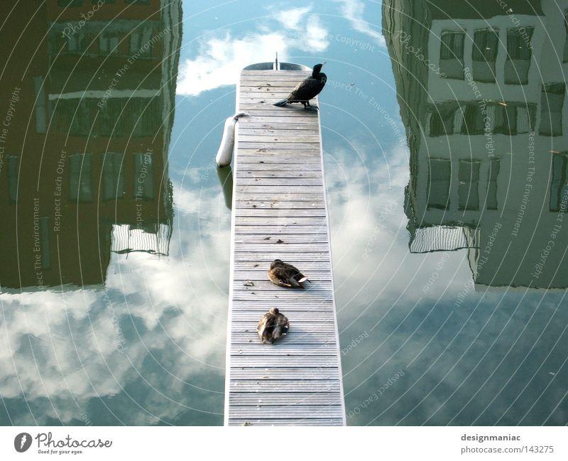 Wind Nord/Ost Startbahn null drei Himmel grün weiß Wasser Erholung Einsamkeit ruhig Tier Haus schwarz dunkel kalt Fenster Wege & Pfade grau 2