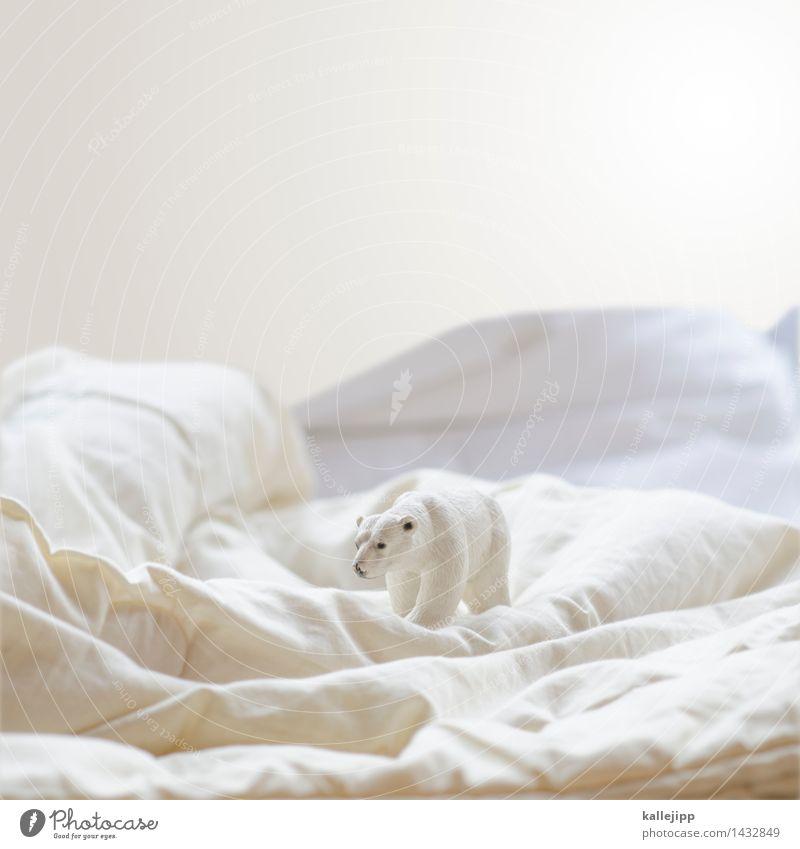 refugium Umwelt Natur Landschaft Winter Eis Frost Schnee Tier 1 weiß Eisberg Eisbär Nordpol kalt Grönland Spielzeug Figur Klimawandel Farbfoto Studioaufnahme