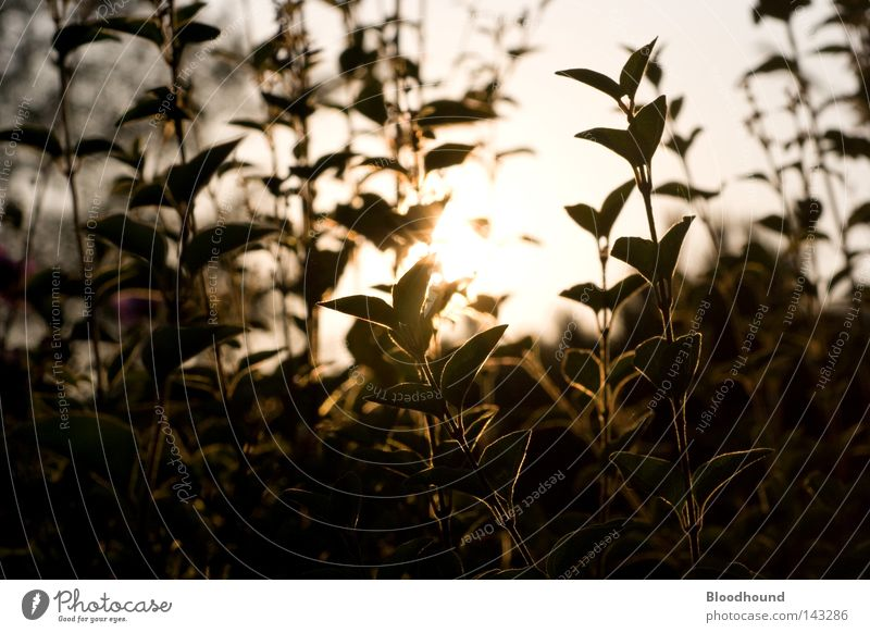 Abendliches Sonnenbad Blume Pflanze Sommer dunkel Sträucher HDR