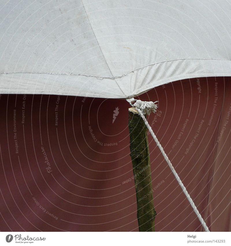 angebunden... Zelt Häusliches Leben Camping Abdeckung Zeltplane Stoff einrichten Schnur Seil gedreht festbinden angekettet spannen Nervosität Knoten Holz