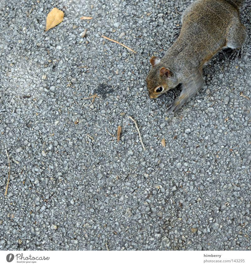 fotoklau im internet Tier Straße Herbst springen Kopf Park Wildtier wild laufen Beton Bodenbelag süß Asphalt Vertrauen Zoo