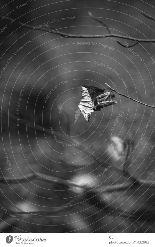 das prinzip hoffnung Umwelt Natur Herbst Winter Wetter Blatt Ast verblüht dunkel trist ruhig Traurigkeit Sehnsucht Einsamkeit Vergänglichkeit Schwarzweißfoto