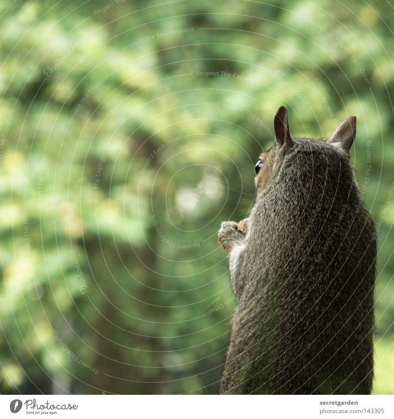 like scrat. Natur grün Baum Freude Tier Wärme Hintergrundbild Spielen grau Garten Park Ernährung Geschwindigkeit niedlich süß weich