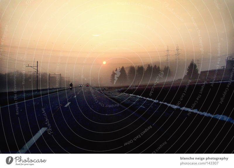 sonnentanken Straße Morgen Winter Sonnenaufgang Nebel kalt Tanne KFZ Autofahren Ferien & Urlaub & Reisen Ziel Telefonmast Ausfahrt Ausflug Arbeitsweg ruhig