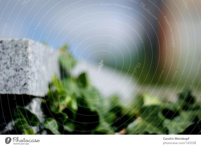 Zeit. Mensch Natur Sommer Blatt Stein Friedhof Gegenteil Efeu Grabstein Kletterpflanzen
