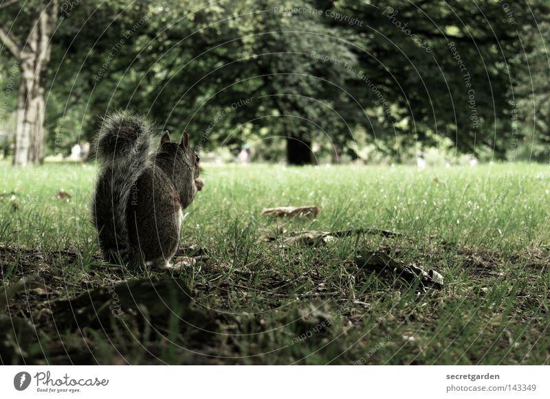 meins, meins, meins. Natur grün Baum Freude Tier Wärme Hintergrundbild Spielen grau Garten Park Ernährung Geschwindigkeit niedlich süß weich