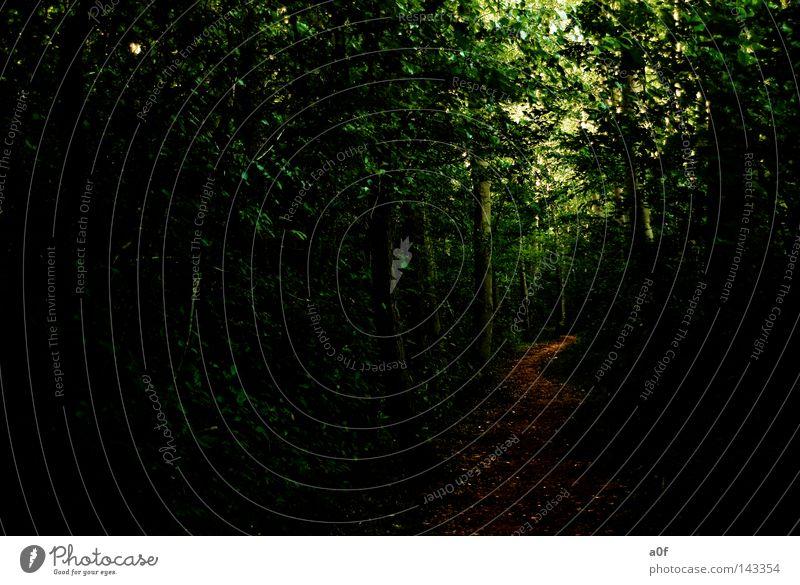 silence grün ruhig Wald Erholung Wege & Pfade Spaziergang