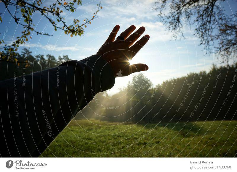 WL* Mensch maskulin Hand Finger 1 45-60 Jahre Erwachsene Umwelt Natur Landschaft Sonne Herbst Pflanze Baum Gras Wiese Gefühle Stimmung Lebensfreude blenden
