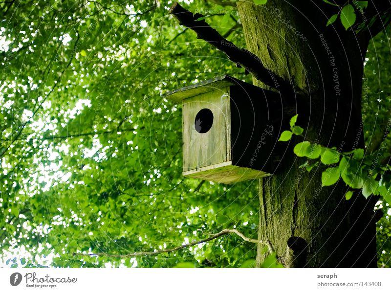 Home Sweet Home Baumstamm Baumrinde Wohnung Futterhäuschen Tarnung hängen Nest Brutpflege Versteck Wetter Klappe geschlossen Wald Pflanze Landeplatz braun beige