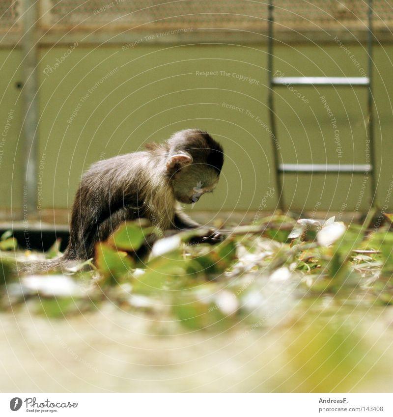Kinderstube Einsamkeit Tier Spielen klein Suche trist Zoo Kindheit Langeweile Kindergarten Säugetier Affen Schüchternheit Gehege verwundbar