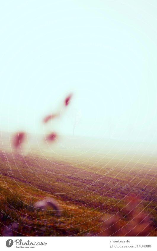 novembermorgen Umwelt Natur Landschaft Urelemente Erde Luft Himmel Wolkenloser Himmel Horizont Herbst Klima Wetter Schönes Wetter Nebel Pflanze Gras Sträucher