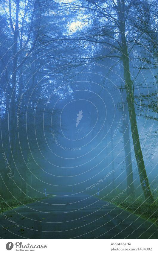 der tag wird gut Himmel Natur Pflanze blau Baum Landschaft Blatt Wald kalt Umwelt Herbst natürlich Stimmung wild Nebel frisch