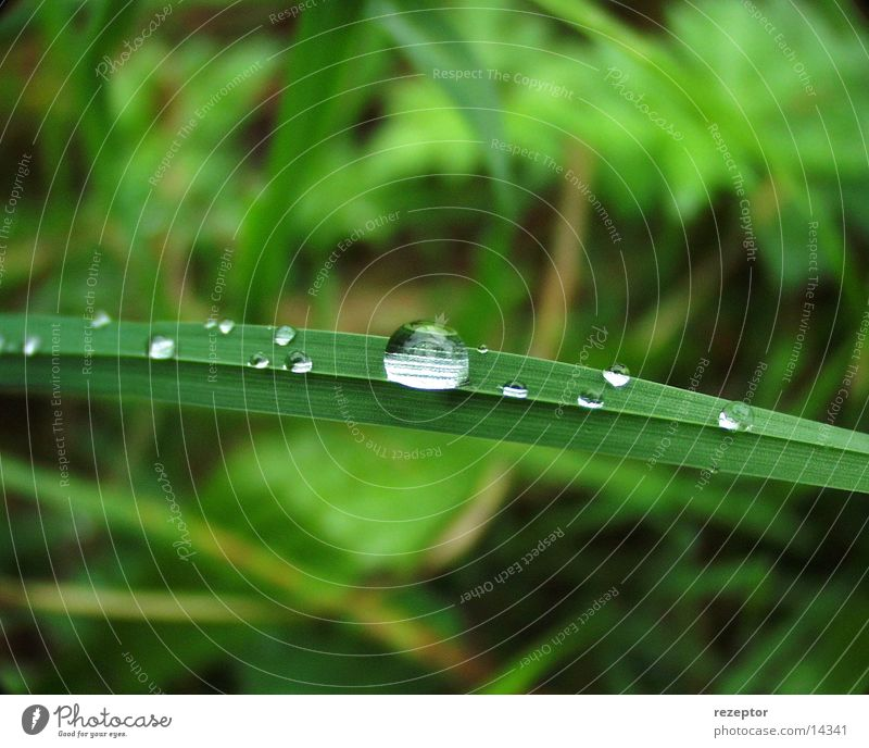 Kristallklar Natur frisch Tau