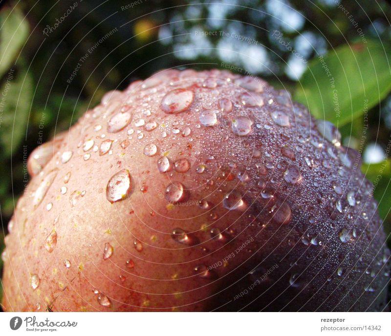 big apple frisch Natur Apfel Wassertropfen