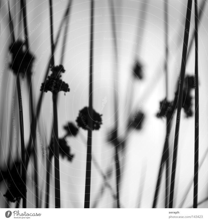 Nature In Mind Gras Halm Schilfrohr grün durcheinander Grasland ökologisch Pflanze Wiese Blüte Herbst diagonal quer hohl Unschärfe Kräuter & Gewürze Ähren