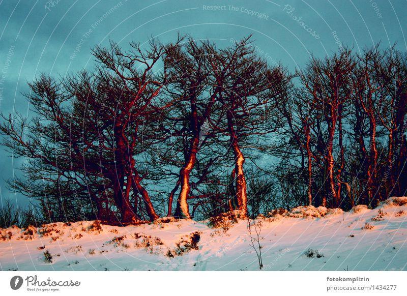 schnee baum treffen Umwelt Natur Pflanze Winter Schnee Baum Bäume Feld alt leuchten stehen Umarmen Zusammensein Stimmung Einigkeit standhaft Einsamkeit