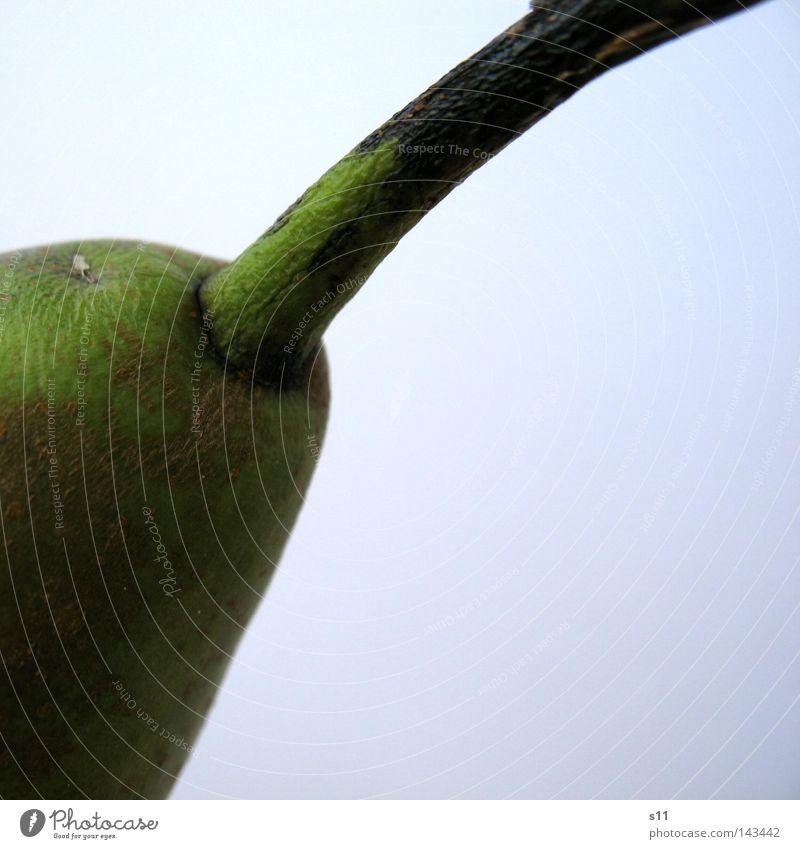 Frucht am Stiel Obstkorb Ernährung Lebensmittel Gesundheit Fruchtzucker grün Freisteller Saft Vitamin süß frisch saftig knackig Makroaufnahme Nahaufnahme Birne