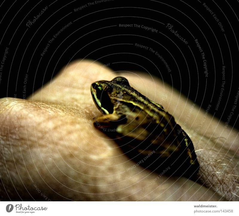 Goldenes Händchen WRN|08 Hand Haut gold Frosch Märchen Lurch Prinzessin Froschlurche Verhext
