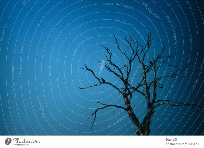 fairytale of the dark tree Himmel alt Baum Tier dunkel Tod Leben Herbst Holz Traurigkeit Vogel Vergänglichkeit Ast Ende trocken Baumstamm