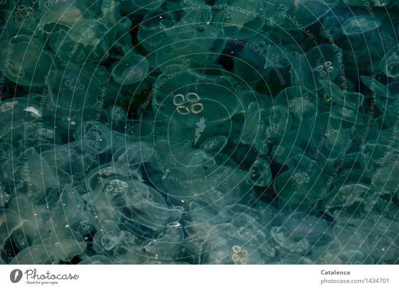 Quallenmeer Meditation Meer Wellen Wassersport Schwimmen & Baden Umwelt Natur Klimawandel Bucht Zusammensein blau grün türkis weiß Farbfoto Außenaufnahme
