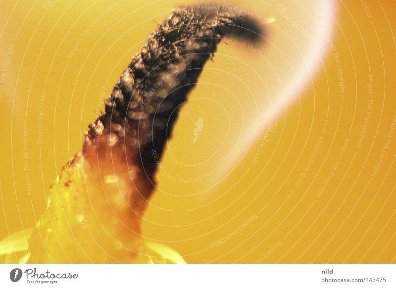 Romantik im Detail Weihnachten & Advent schwarz gelb Wärme Feste & Feiern Brand Geburtstag Kerze Romantik nah weich Physik heiß brennen Flamme flach