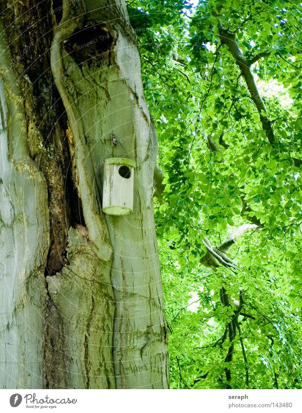 Schlupfloch Natur Baum Pflanze Blatt Wald braun Wetter Vogel Wohnung geschlossen Perspektive Häusliches Leben Schutz verfallen Loch Baumstamm
