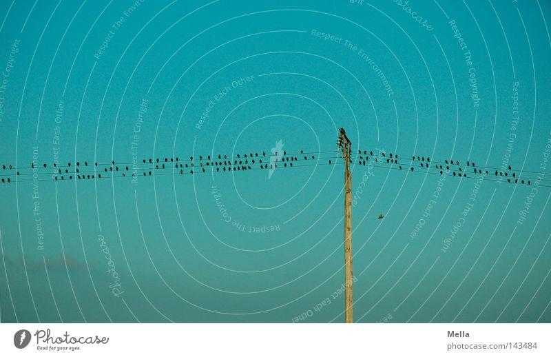 Noten by nature Himmel blau oben Vogel klein sitzen Energiewirtschaft Technik & Technologie Tiergruppe Kabel Reihe Strommast Leitung hocken Telefonmast Schwarm