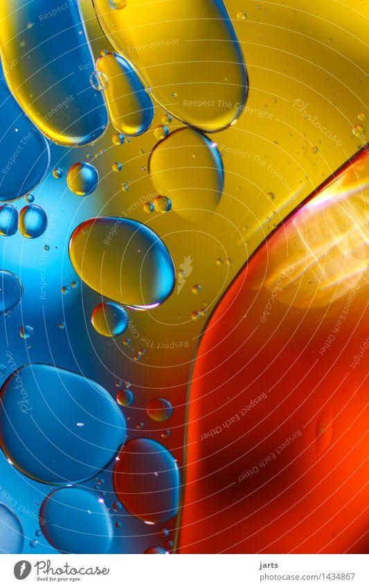 liquid colour #4 Öl Wasser Schwimmen & Baden außergewöhnlich elegant frisch hell nass rund blau gelb rot Kreativität Blase Wasserblase mehrfarbig Farbe