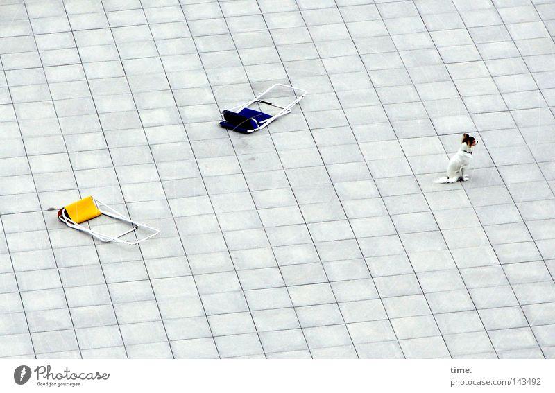 Search & Destroy blau gelb Spielen Hund Erfolg Beton sitzen liegen Säugetier Zerstörung kariert unschuldig hocken Stuhl Steinplatten