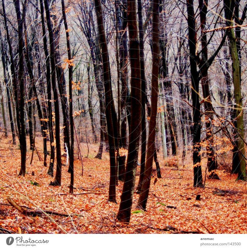 Herbstwald Wald Baum Blatt rot Landschaft Natur Spaziergang