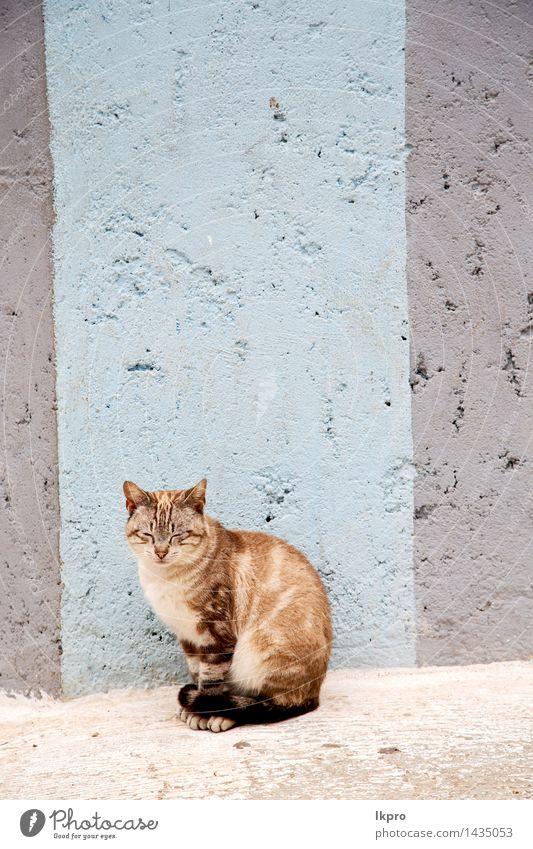 und Haus Hintergrund Katze Natur Mann schön Sommer weiß Erholung rot Einsamkeit Tier Gesicht Erwachsene Straße Holz klein
