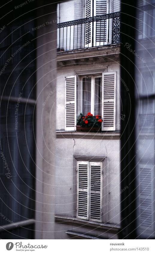 Fenster in Paris Sommer Blume Haus Altbau Zimmerpflanze Wohnung