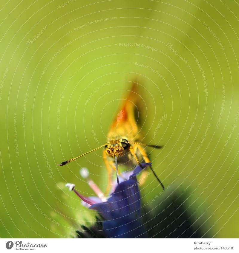 air force one Insekt Schmetterling Frühling Sommer Staubfäden Blume Sonnenlicht Ernährung Tier Zoo mehrfarbig grün Umweltschutz Wiese Feld Natur Nektar
